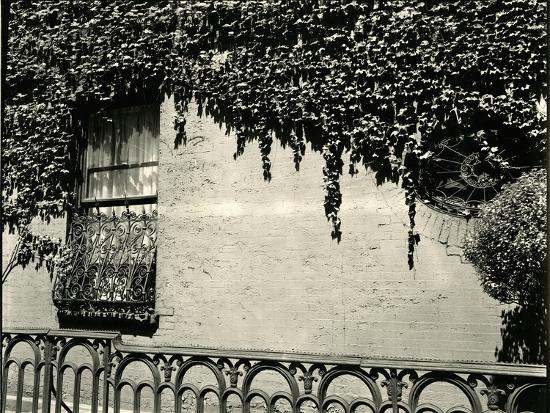 decorative windows for houses.htm window  ivy on wall  new york  1945 photographic print by brett  photographic print by brett