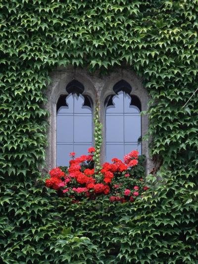 Window of Regensburg Town Hall-Adam Woolfitt-Photographic Print