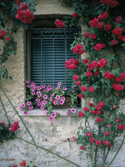 Window on Stucco Wall Surrounded by Red Roses with Petunia Flower Box-Todd Gipstein-Photographic Print