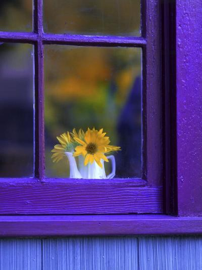 Window with Sunflowers in Vase-Steve Terrill-Photographic Print