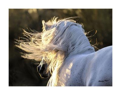 Winds Aloft-Barry Hart-Art Print