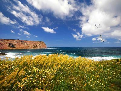Winds from the Sea-Philippe Sainte-Laudy-Photographic Print