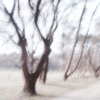 https://imgc.artprintimages.com/img/print/winds-of-light_u-l-q1gvvrn0.jpg?p=0