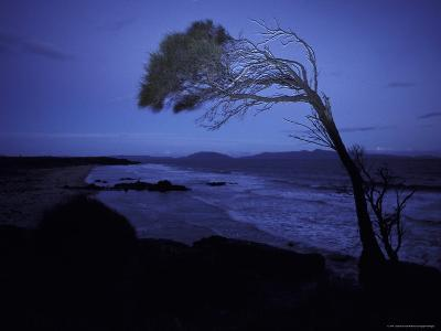 Windswept Scraggly Coastal Tree after Sunset on a Stormy Night, Australia-Jason Edwards-Photographic Print