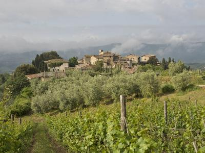 Wine Fields and Olive Groves in Foreground-Keenpress-Photographic Print