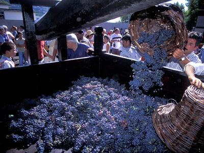 Wine Press, Wine Harvest Festival, Camara De Lobos, Madeira, Portugal--Photographic Print