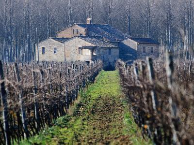 Winery Vines and Buildng, Torgiano, Umbria, Italy-Oliver Strewe-Photographic Print