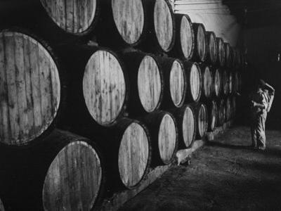 Winery Worker Checking Barrels of Wine
