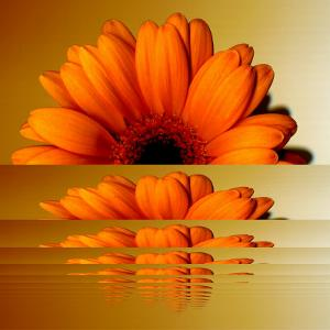 Gerbera Flower as Rising Sun by Winfred Evers