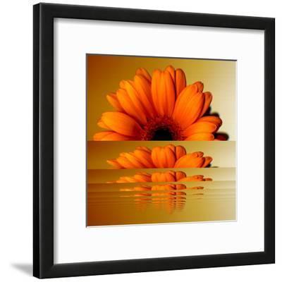 Gerbera Flower as Rising Sun