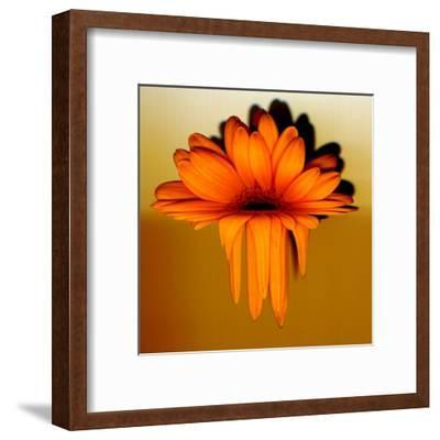 Gerbera Flower Melting, Digital Manipulation