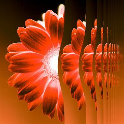 Gerbera Flower Vertical Slivers by Winfred Evers