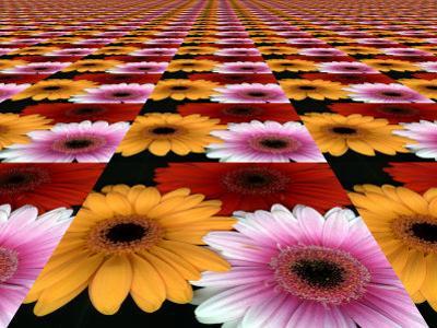 Gerbera Flowers Multiplied in Tiles by Winfred Evers