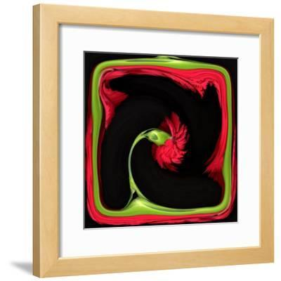 Red Carnation Distorted in a Frame
