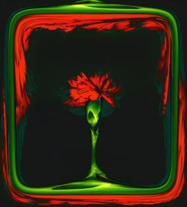 Red Carnation Formalized in a Frame by Winfred Evers