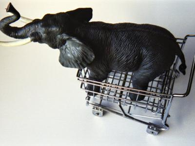 Toy Elephant in Toy Supermarket Cart by Winfred Evers