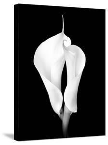 Two White Calla Lilies by Winfred Evers
