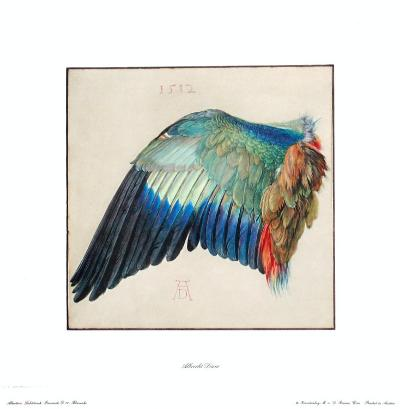 Wing of a Roller-Albrecht D?rer-Collectable Print
