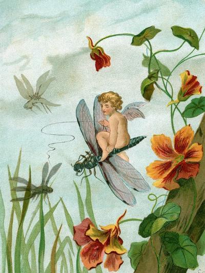 Winged Fairy Riding a Dragonfly Near Nasturtium Flowers, 1882--Giclee Print
