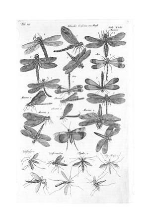 Winged Insects in Black and White