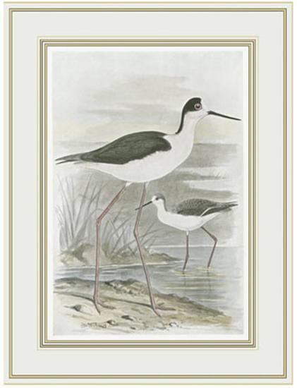 Winged Stilt--Art Print