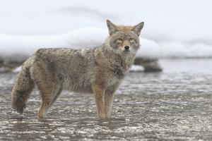 Coyote Creek by Wink Gaines