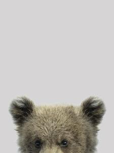 Curious Bear by Wink Gaines