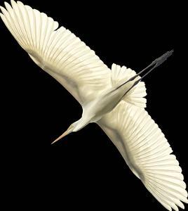 Flying Egret - Noir by Wink Gaines