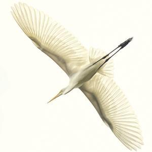 Flying Egret by Wink Gaines