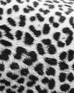 Leopard Patterns - Detail by Wink Gaines