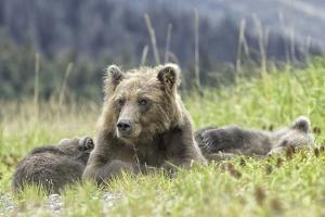Nap Time by Wink Gaines