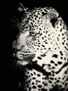 Night Leopard by Wink Gaines