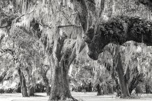 Twisted Grove by Wink Gaines