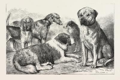 Winners at the Dog Show of the Kennel Club--Giclee Print