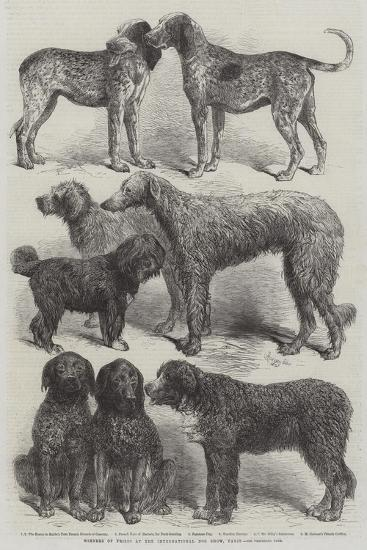 Winners of Prizes at the International Dog Show, Paris-Harrison William Weir-Giclee Print