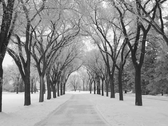 Winnipeg Manitoba, Canada Winter Scenes Photographic Print by Keith Levit |  Art com