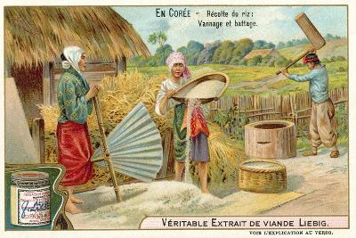 Winnowing and Threshing Harvested Rice, Korea--Giclee Print