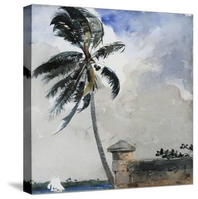 A Tropical Breeze, Nassau, 1889-90