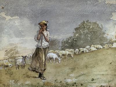 Tending Sheep, Houghton Farm