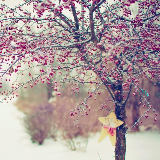 Winter Berries II-Kelly Poynter-Photographic Print