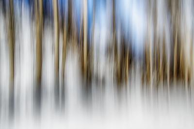 Winter Birches-Ursula Abresch-Photographic Print