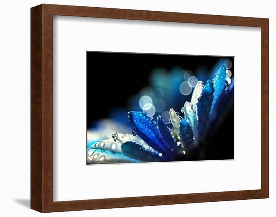 Winter Blues-Ursula Abresch-Framed Photographic Print
