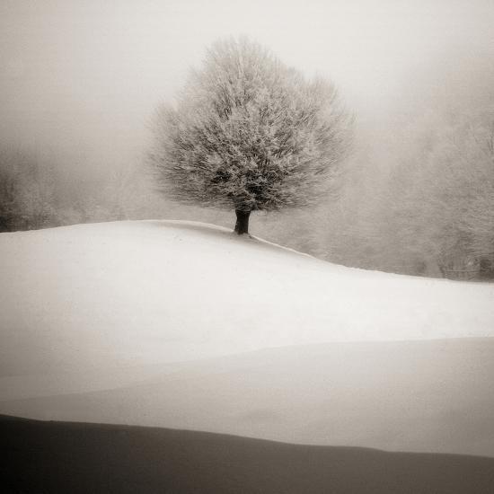 Winter Degradee-SC-Photographic Print