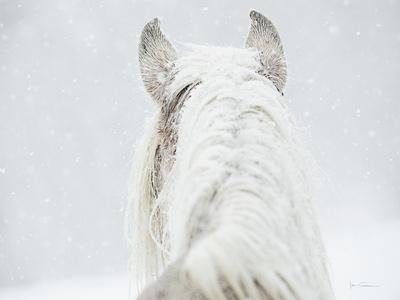 https://imgc.artprintimages.com/img/print/winter-dreaming_u-l-q10wbxq0.jpg?p=0