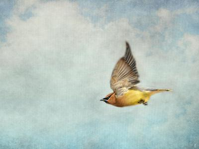 Winter Flight Cedar Waxwing-Jai Johnson-Giclee Print