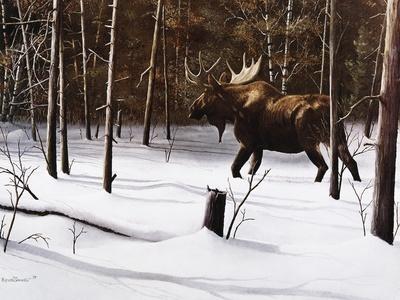 Winter Forage-Kevin Daniel-Art Print