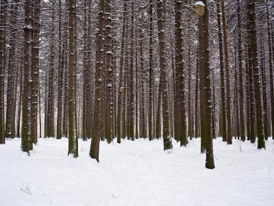 Winter Forest in Snow, Moscow, Russia-Ivan Vdovin-Photographic Print