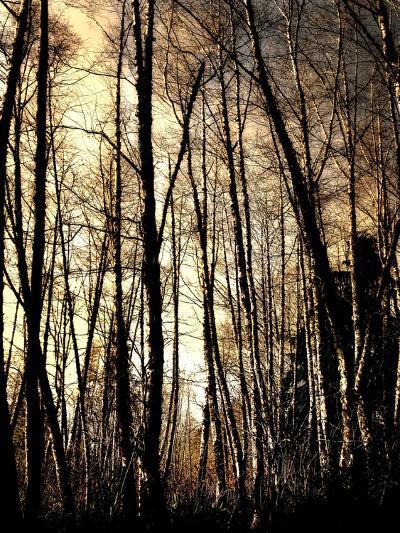 Winter Forest Light-Jody Miller-Photographic Print