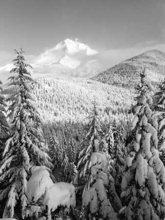 https://imgc.artprintimages.com/img/print/winter-frost-trees-on-mt-hood-mt-hood-national-forest-oregon-usa_u-l-piedfq0.jpg?p=0