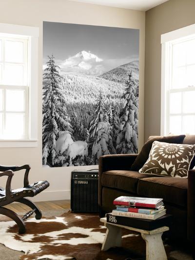 Winter Frost Trees on Mt. Hood, Mt Hood National Forest, Oregon, USA-Stuart Westmorland-Wall Mural